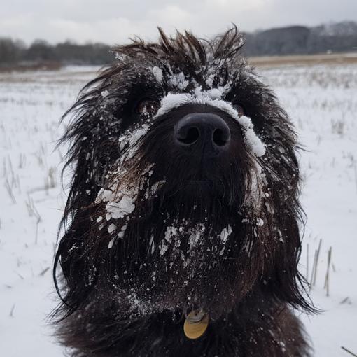 dog behaviourist wirral dog